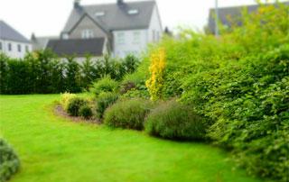 pelouse et plantations