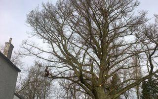 élagage arbre menaçant