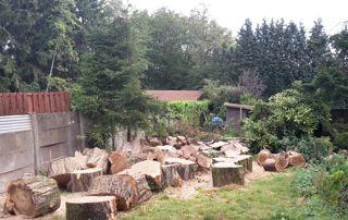 jardin avec souches après abattage