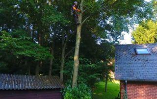 arboriste grimpeur professionnal