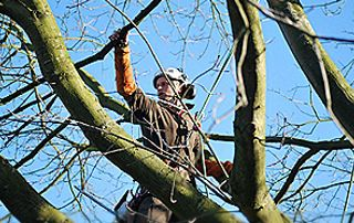 Elagueur dans un arbre