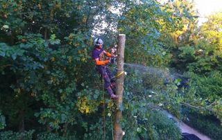 Elagueur dans un arbre en hauteur