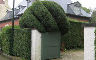 entrée avec arbre taillé en forme