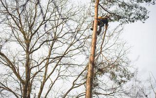 enlèvement des branches en hauteur