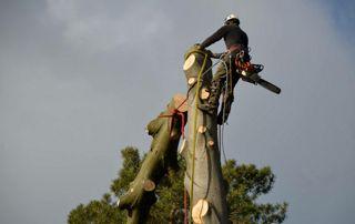 abattage arbre par démontage
