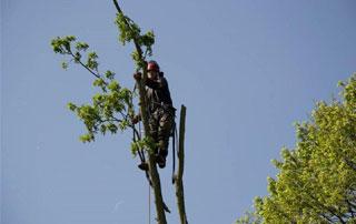 démontage arbre à Huy