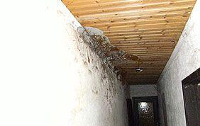 moisissures au plafond