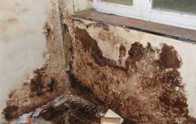 Mur infesté par l'humidité
