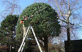 taille douce arbre