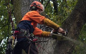 Elagage arbre Namur
