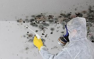traces de mérule au plafond