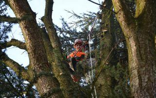 élagueur en haut d'un arbre