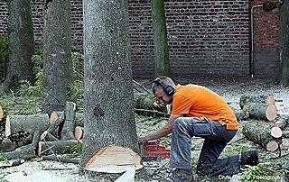 abattage et débitage arbre