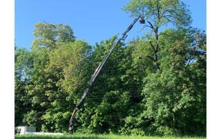 travaux d'élagage arbre