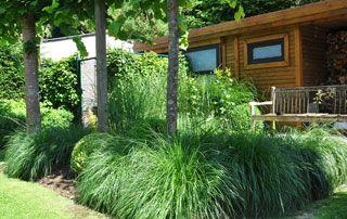 abri de jardin entouré de herbes hautes