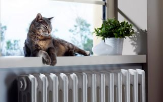 chat se chauffant au-dessus du radiateur
