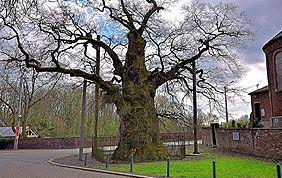 arbre malade soutenu par des poteaux