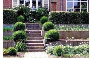 amenagement d'escaliers extérieurs et arbustes