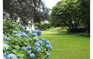 vaste jardin et fleurs bleues