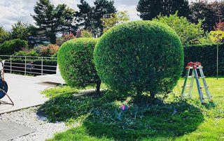 taille d'arbres en boule