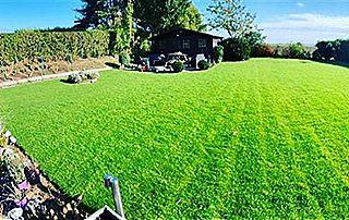 belle pelouse bien tondue