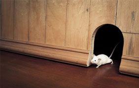 souris dans la maison