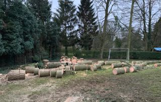 arbres abattus par démontage