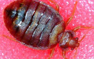 insecte repoussant