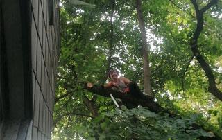 élagueur-grimpeur à Huy