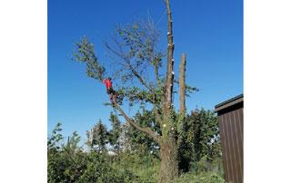 démontage d'arbre dangereux