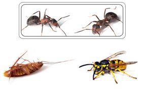 Insectes et blattes