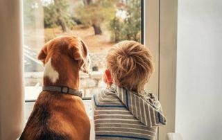 garçon et son chien qui regardent par la fenêtre