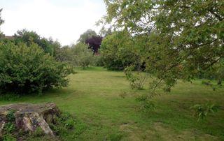 Vaste terrain et souche d'arbre