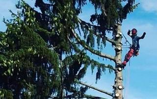 Elagage d'un arbre