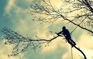 Elagage de branche
