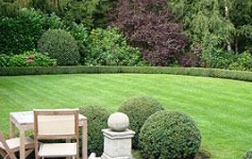 pelouse et haie avec terrasse