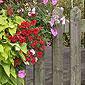 clotures bois et fleurs