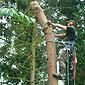 Abattage d'arbre Hainaut