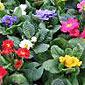 buisson fleurs colorées