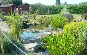 étange entouré de plantes aquatiques