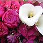 Roses fuchsia et arum