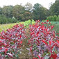 horticulture fleurs