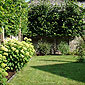 jardin avec arbre et arbustes