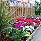 pépinière fleurs annuelles