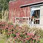 terrasse extérieure fleurs