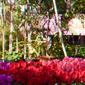 fleurs en pots en exposition