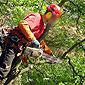 élagueur grimpeur avec tronçonneuse