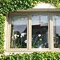fenêtre en PVC entourée de lierre
