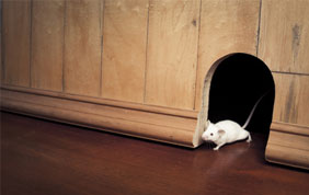souris blanche qui sort d'un trou