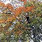 Arbre aux feuilles d'automne